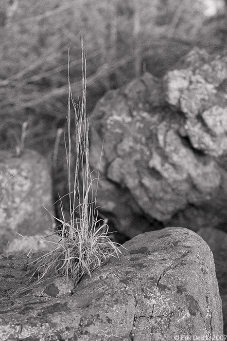 Grass on Rock