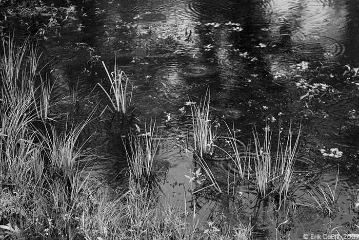 Rain and Pond Grass